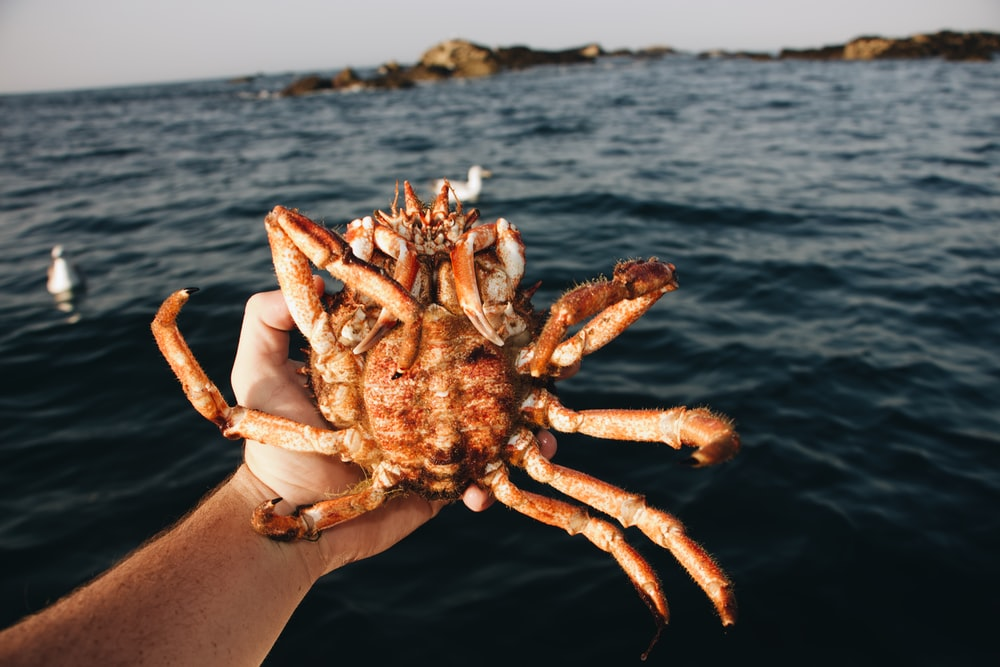 person holding crabs