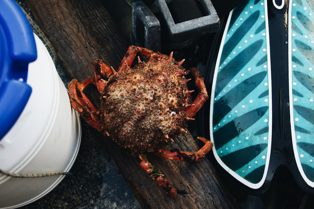 brown crab near white plastic container