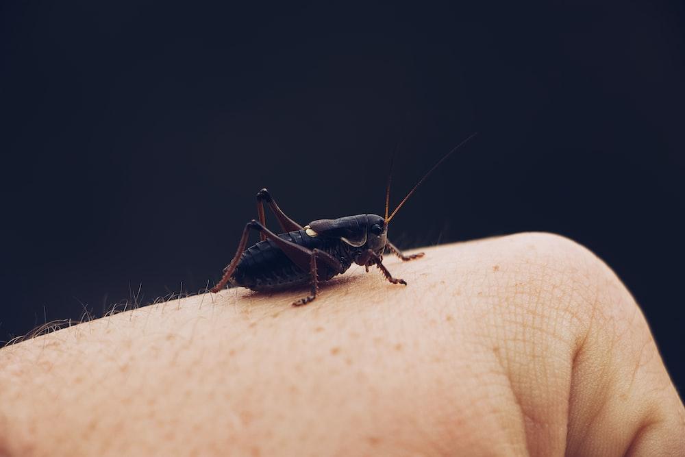 Cara Membasmi Serangga Dirumah Dengan Cepat