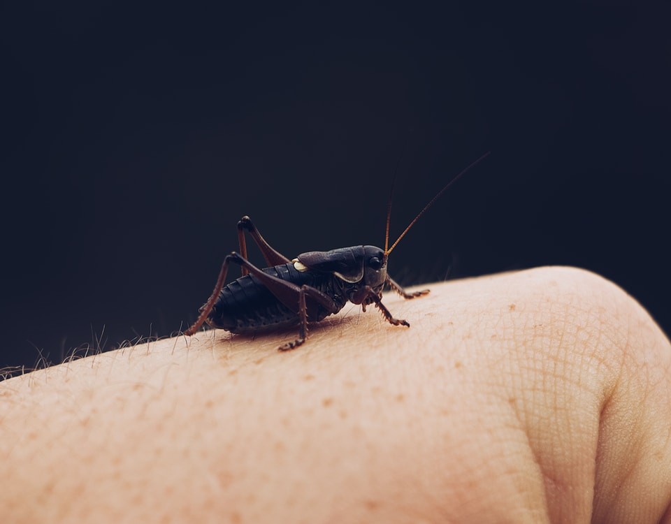 black bug on person's hand