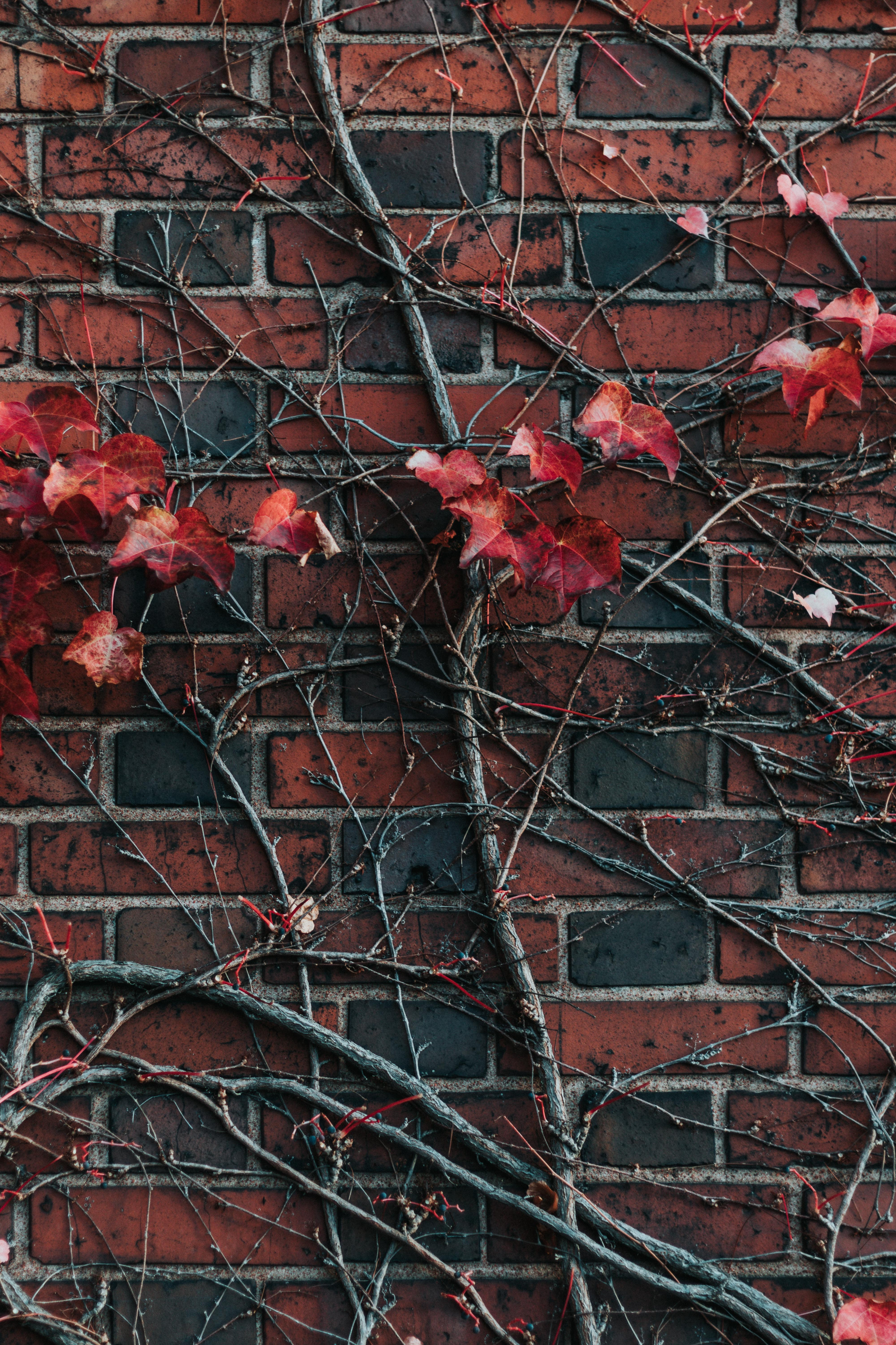 red-petaled flower on red and black brick wall