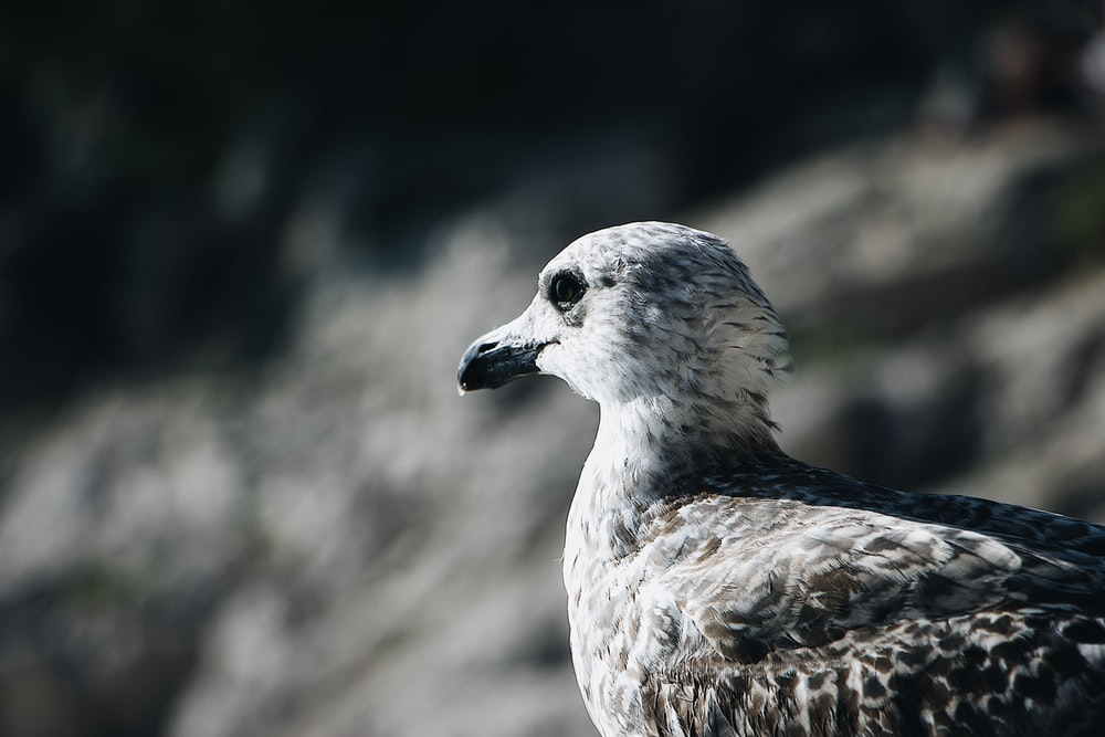 selective-focus photograph of seagull