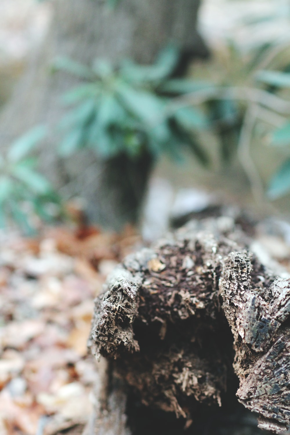 selective focus photography of brown driftwood