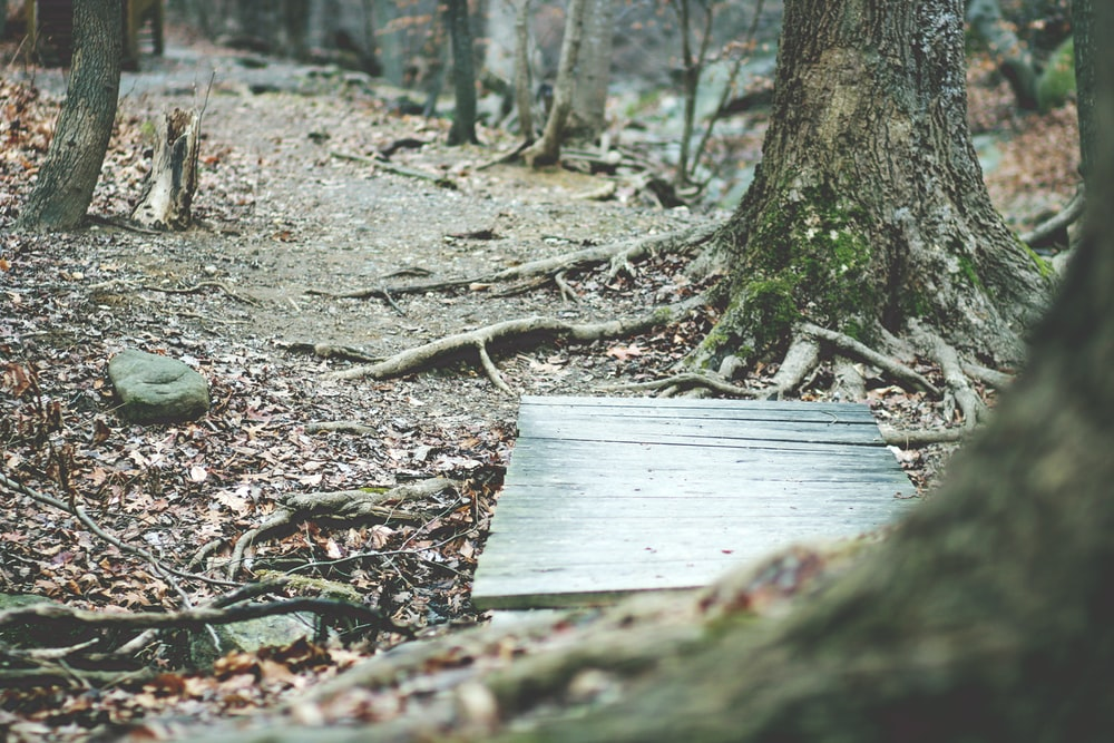 rectangular gray wooden board near trees