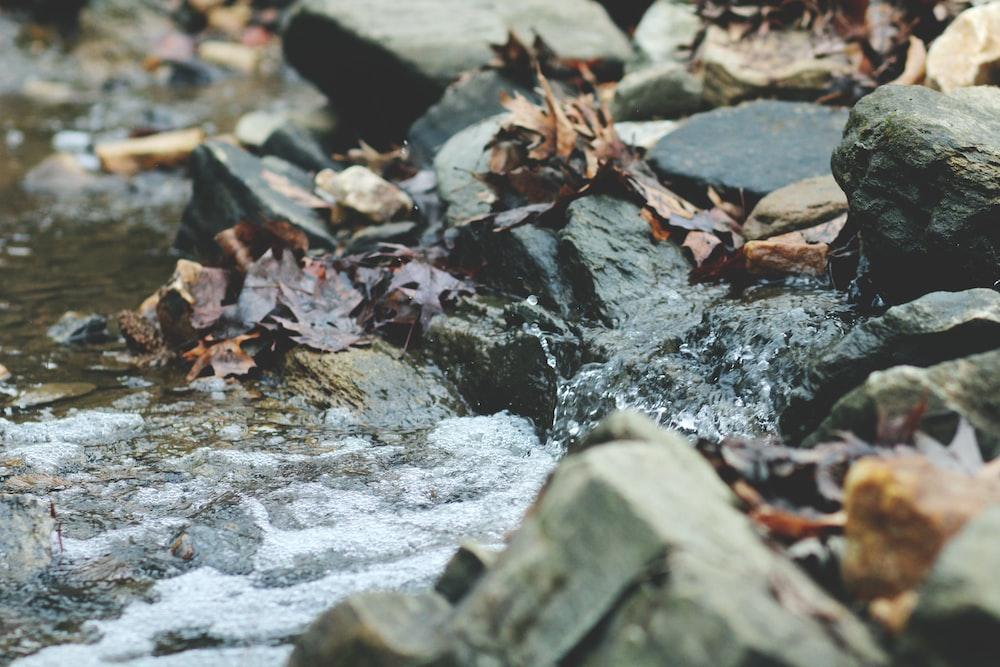 dried leaves on gray rocks