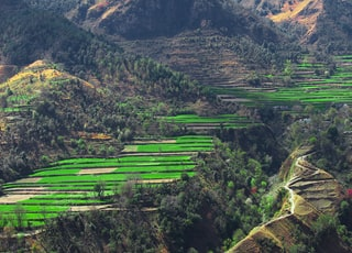 birds eye photography of rice terraces
