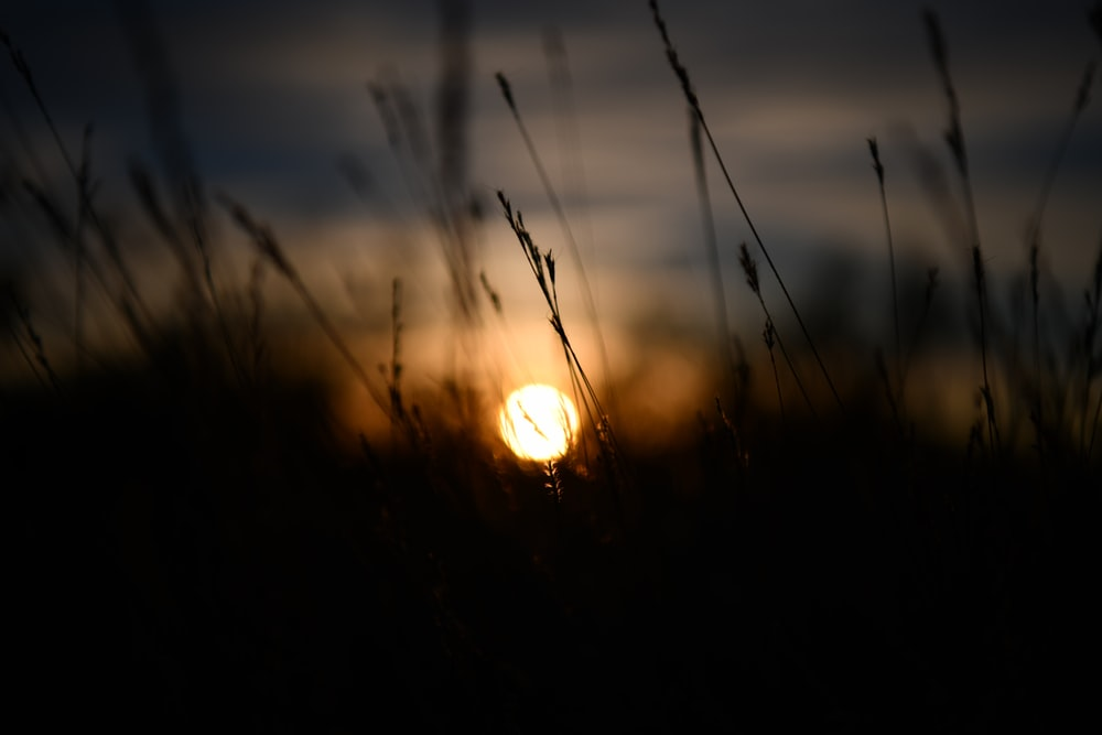 selective focus photography of grass during golden hour