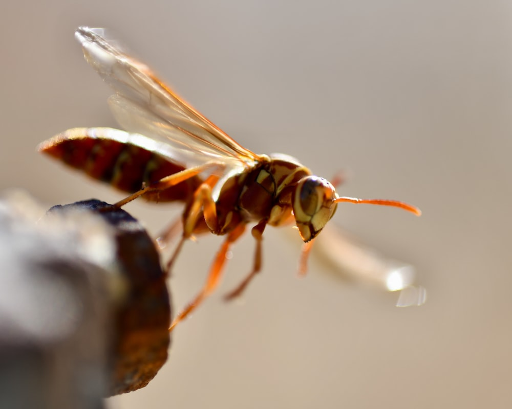 brown fly close-up photography