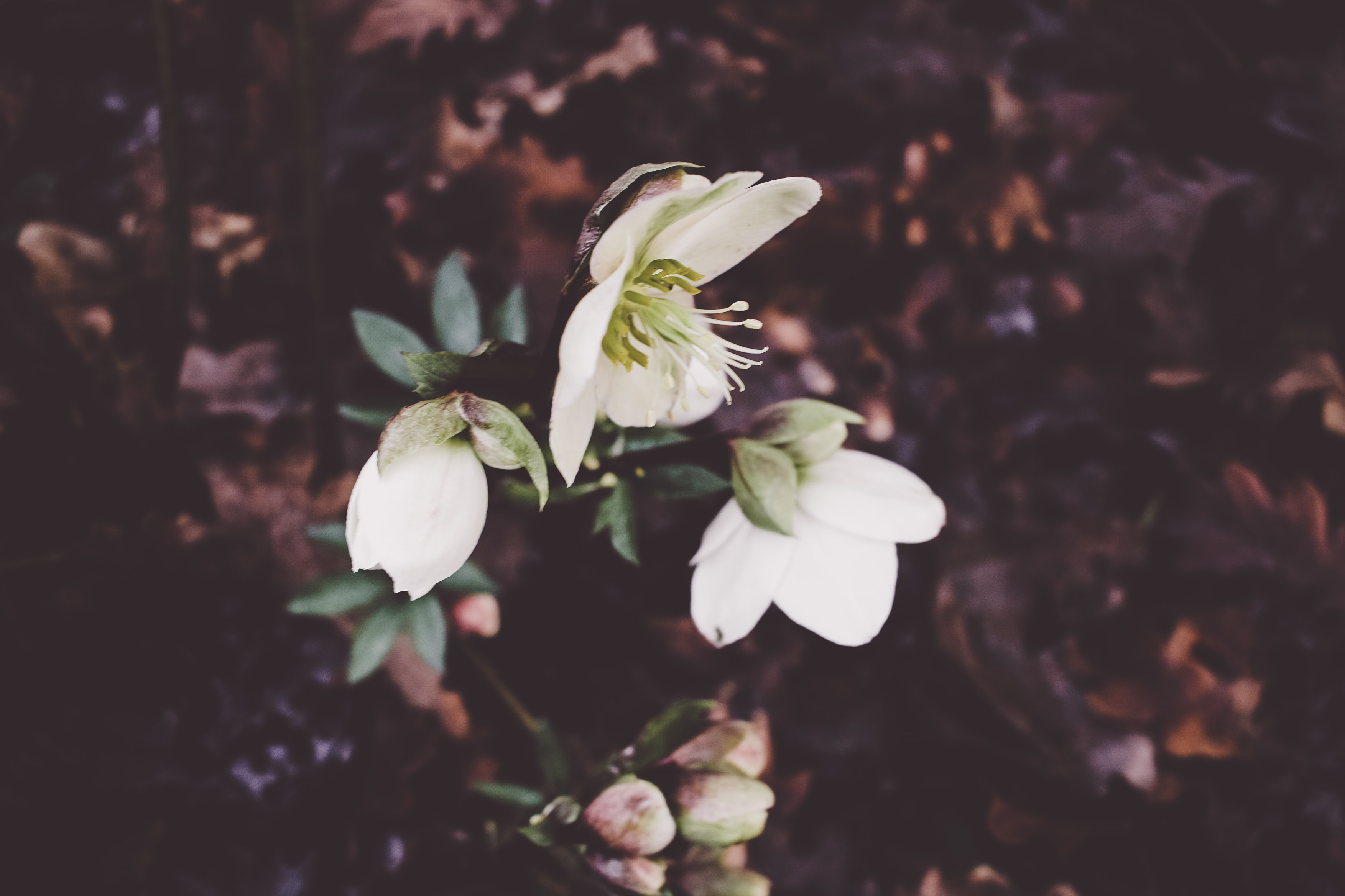white petaled flowers in close-up photography