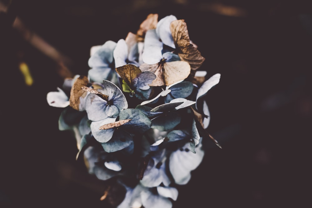 selective focus photography of gray petaled flower