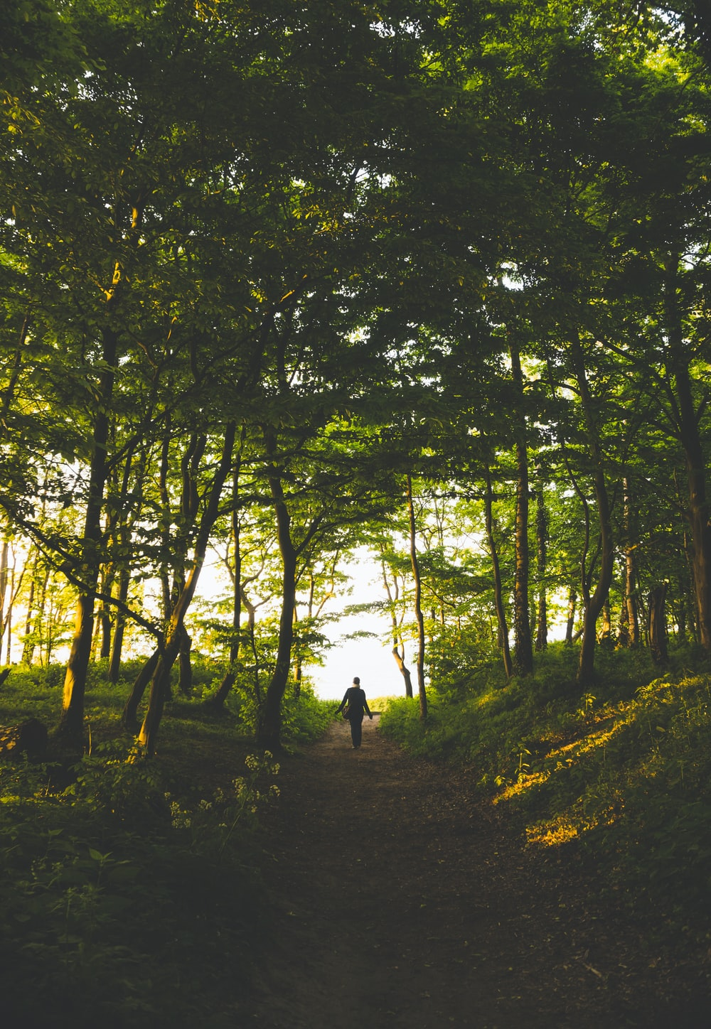 person standing in woods