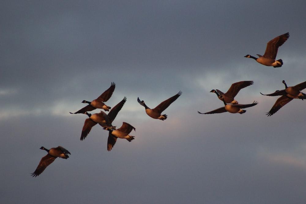 flight of brow birds