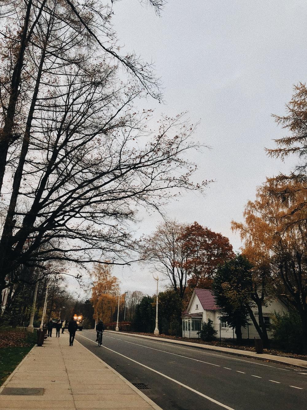people walking on street sideway near trees during daytime