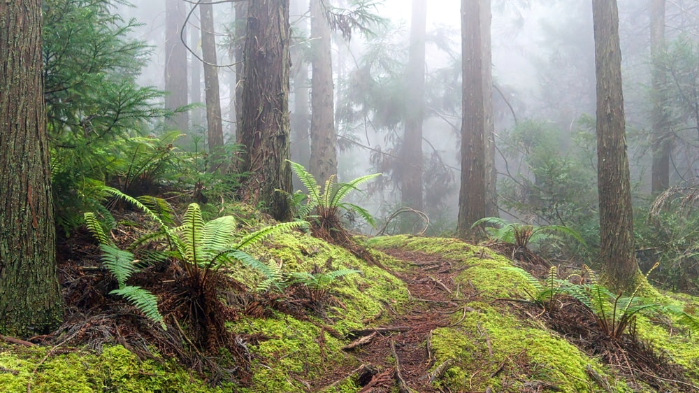 landscape photography of forest with fogs