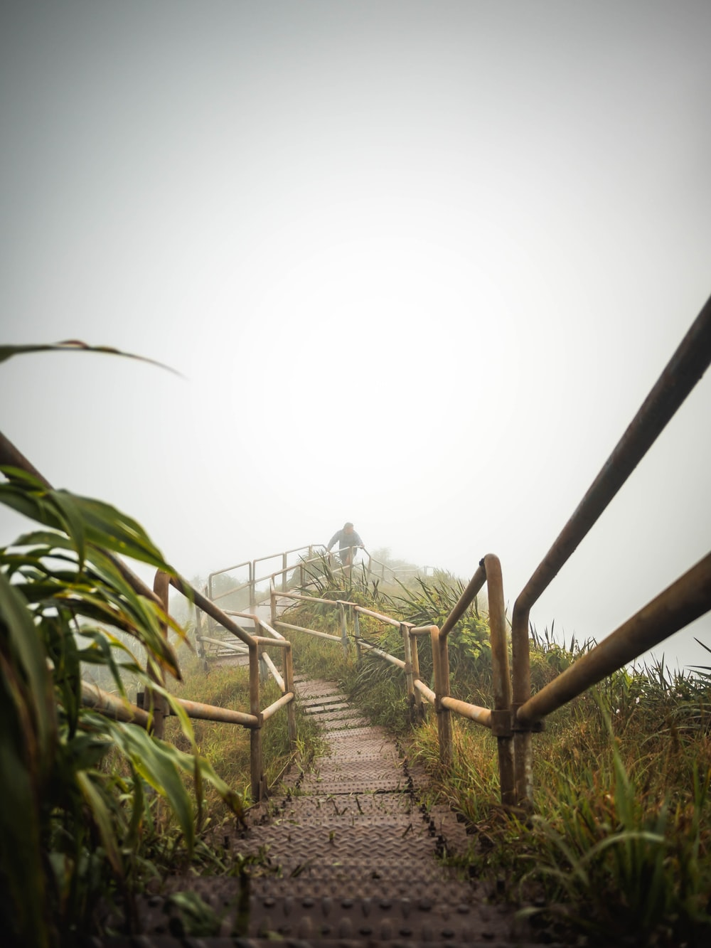 empty pathway covered in fog