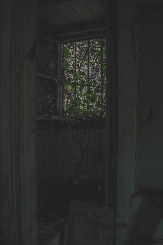 vine plants creeping into window