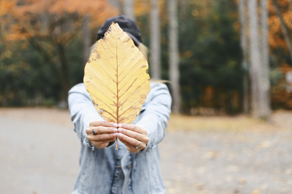 person holding brown leaf during daytime