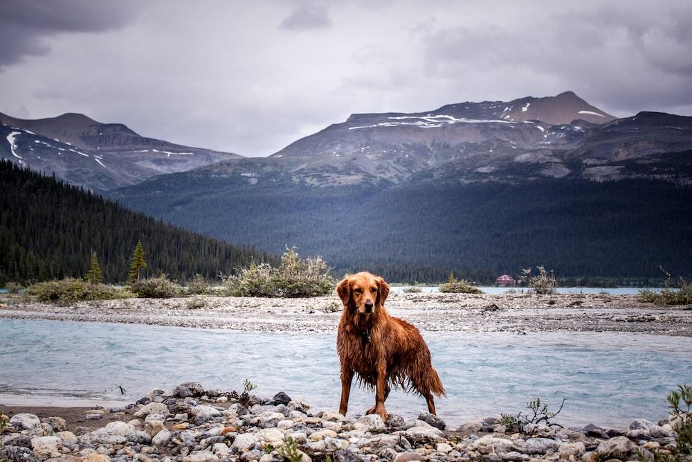pet dog near rier
