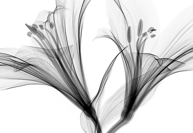 Random abstract image to fill the card.