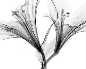 587. Minimalista, fekete-fehér