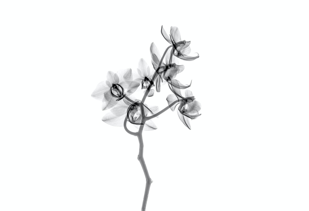 500 Black And White Flower Pictures Hd Download Free Images On