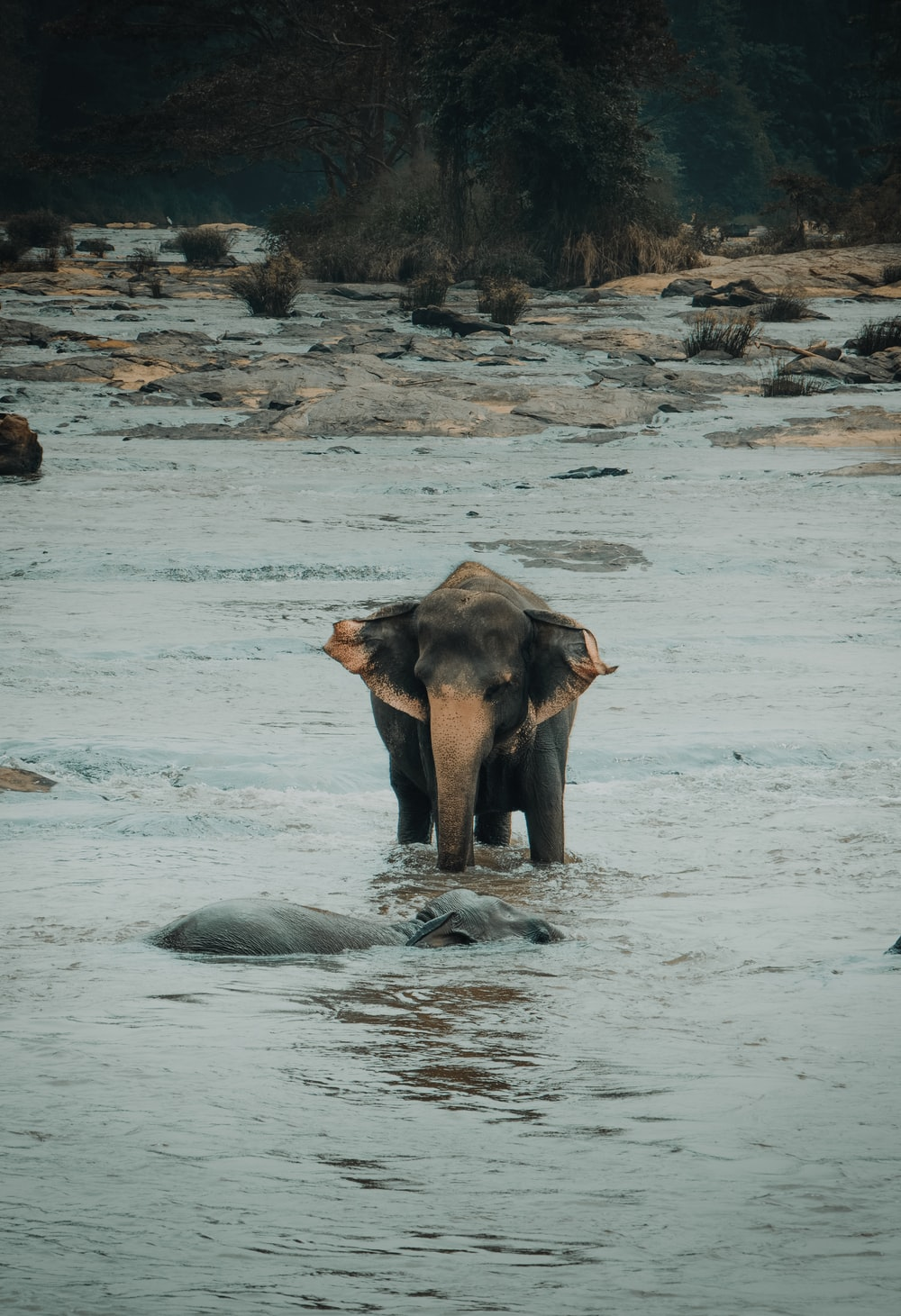 elephant calf walking on body of water