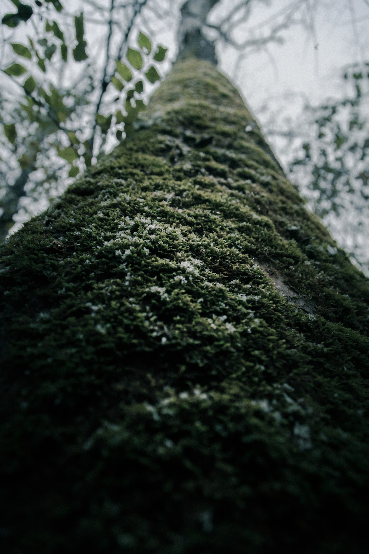 green tree photography
