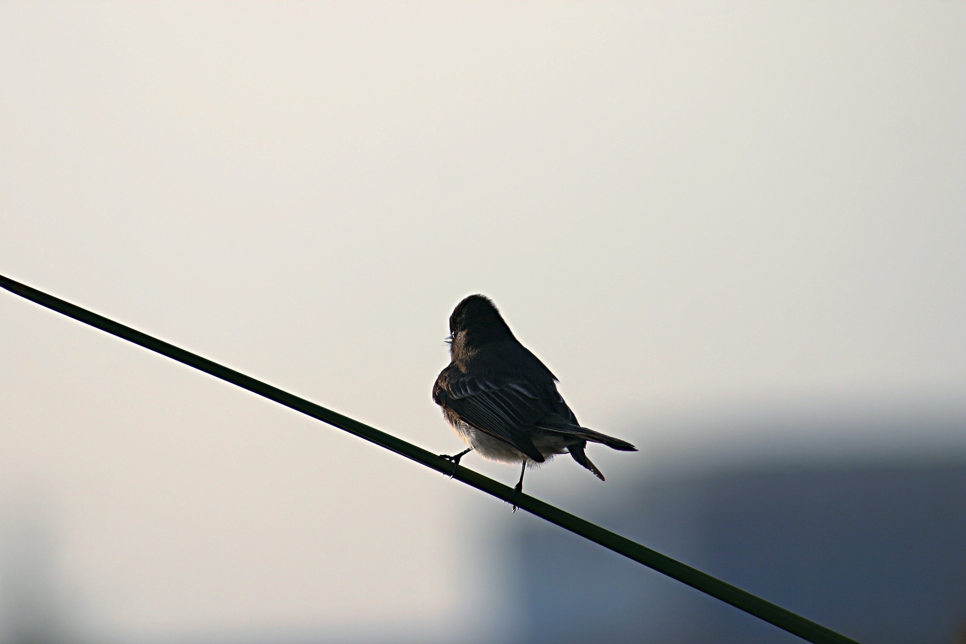 bird perched on wire