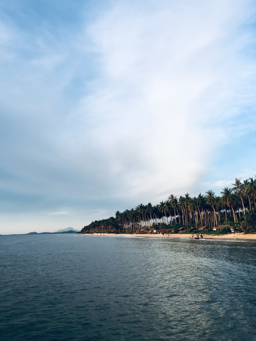 coconut trees in beach at daytime