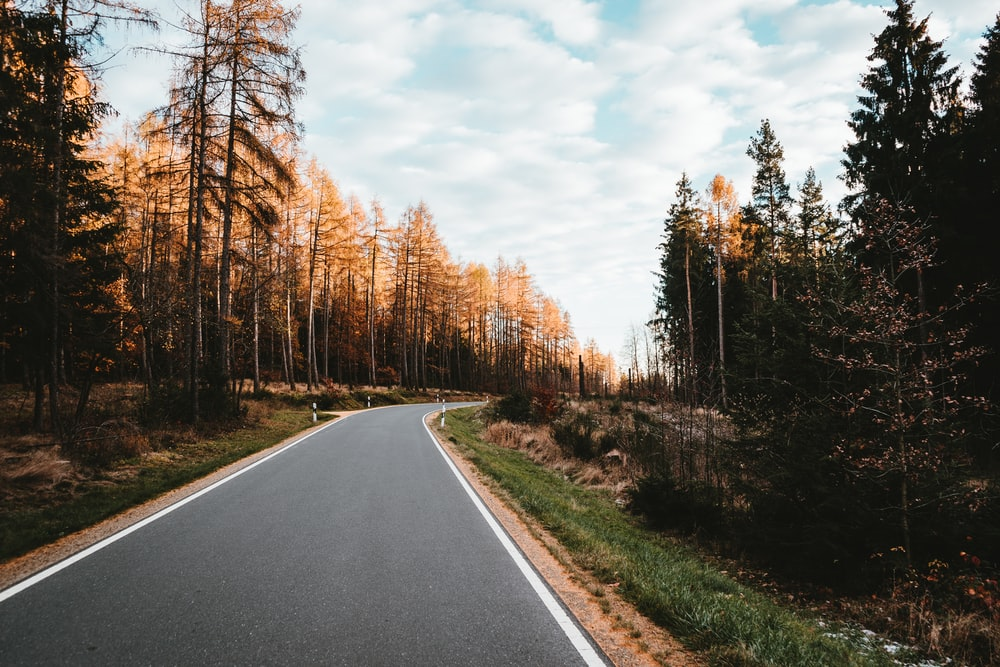 empty road surrounded by trees during daytime