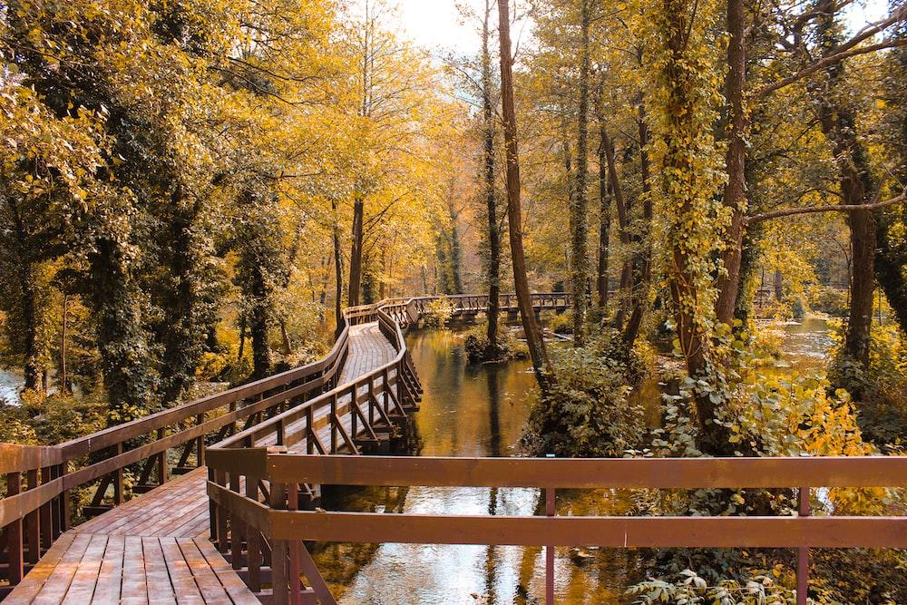 empty wooden bridge over body of water