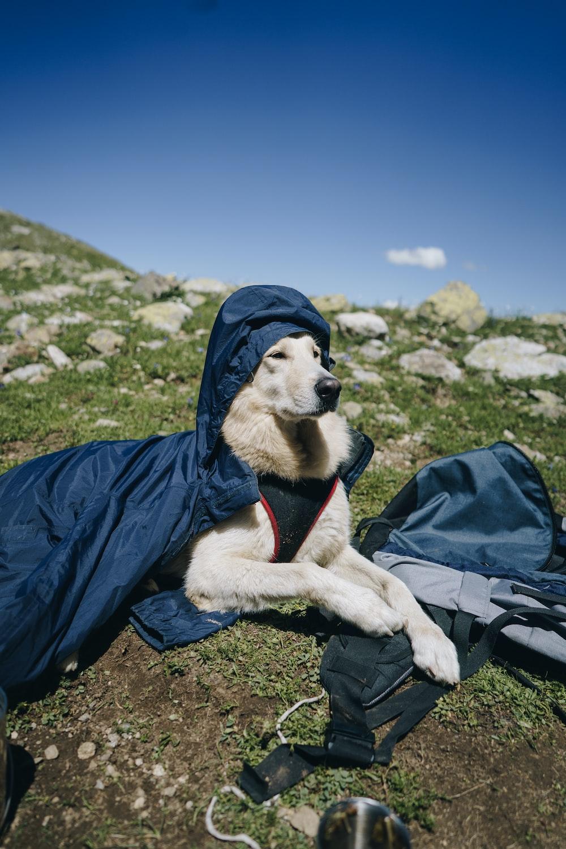 beige short-coated dog on green grass during daytime