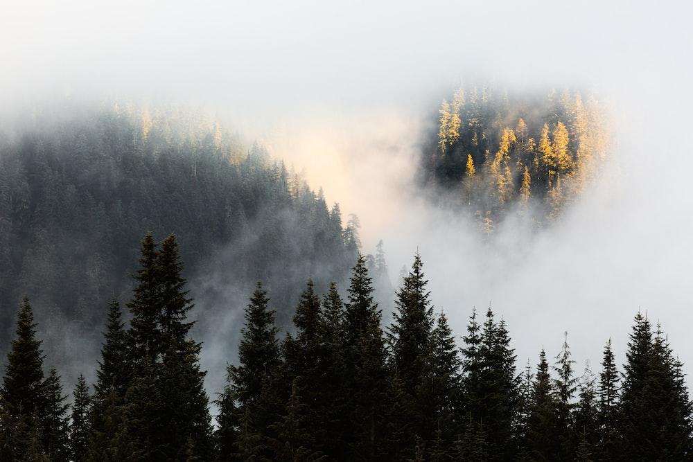 trees near mountains