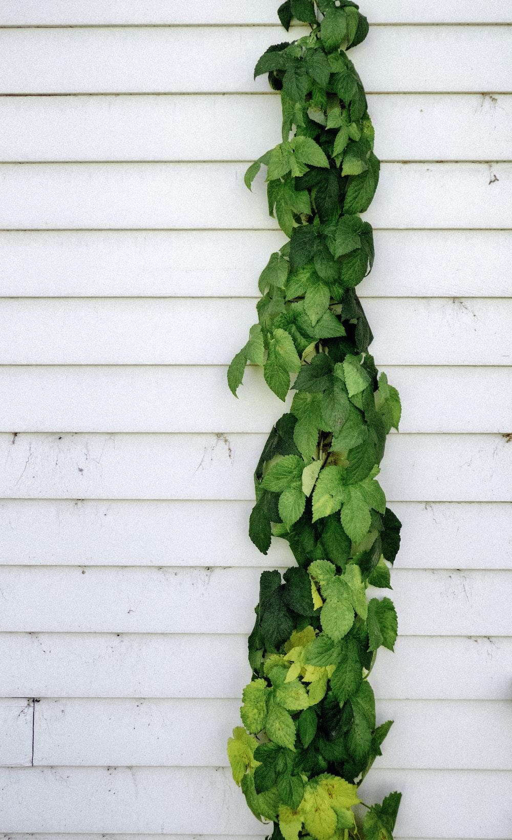 green vine plant near wall