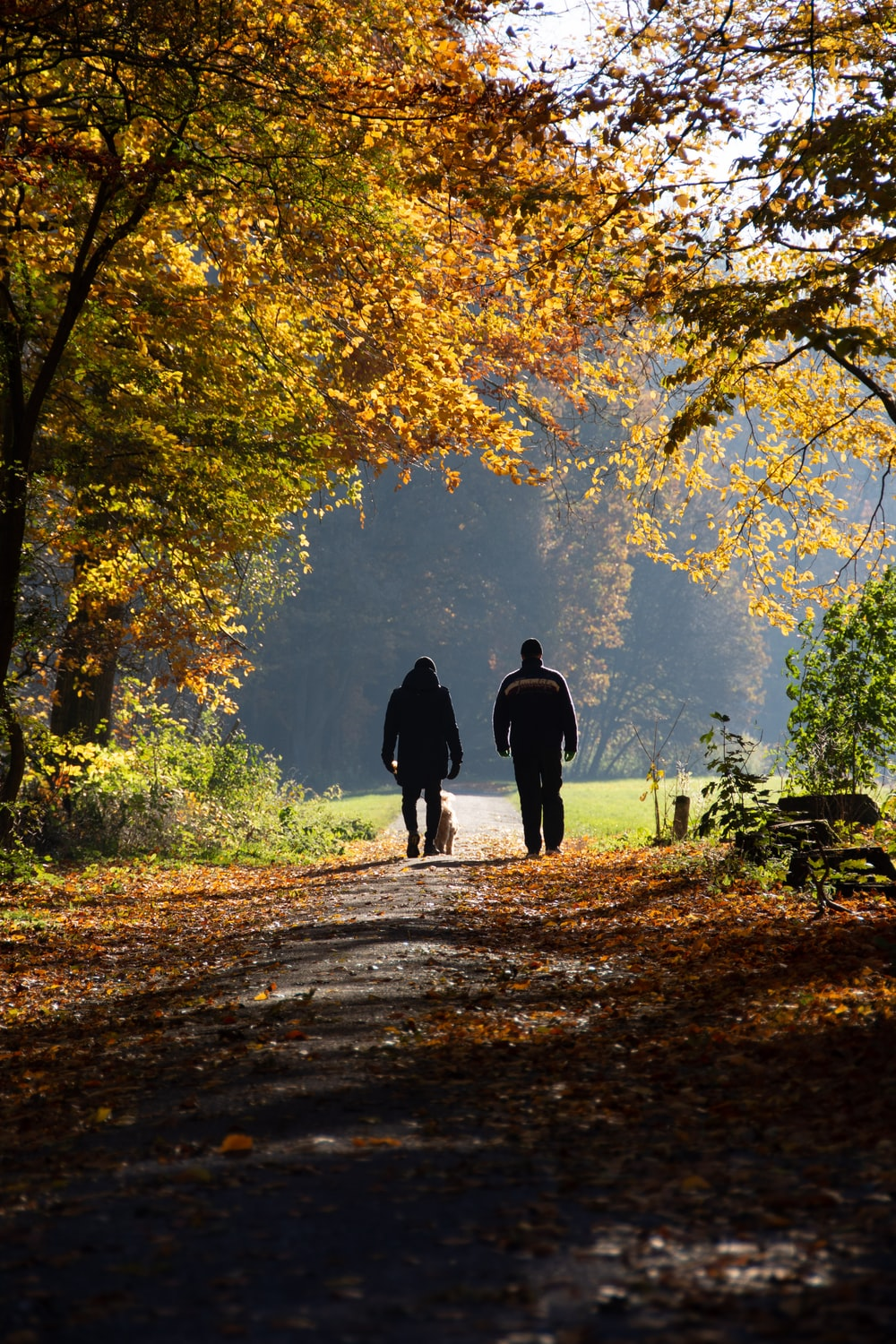 two persons on pathway between trees