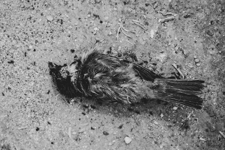 One Baby Bird