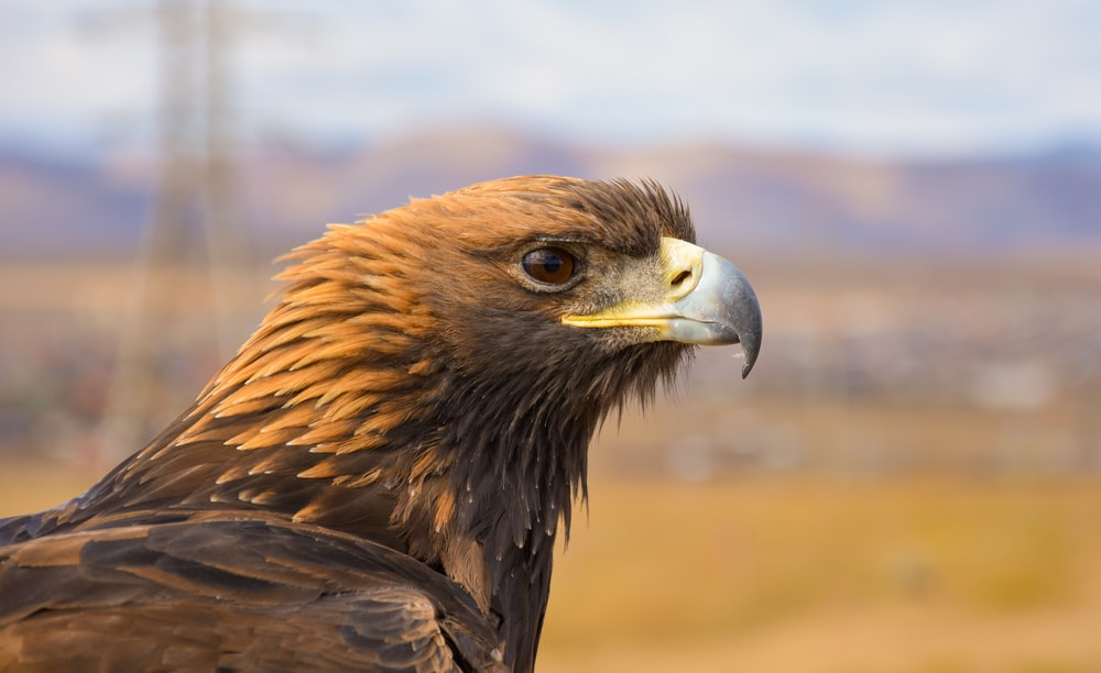 brown eagle in close-up photography