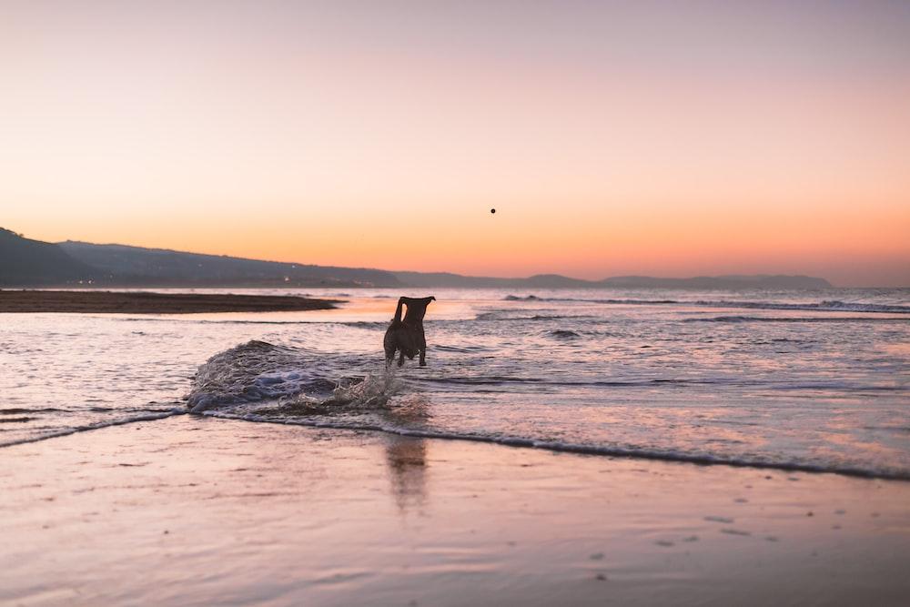 dog standing during daytime