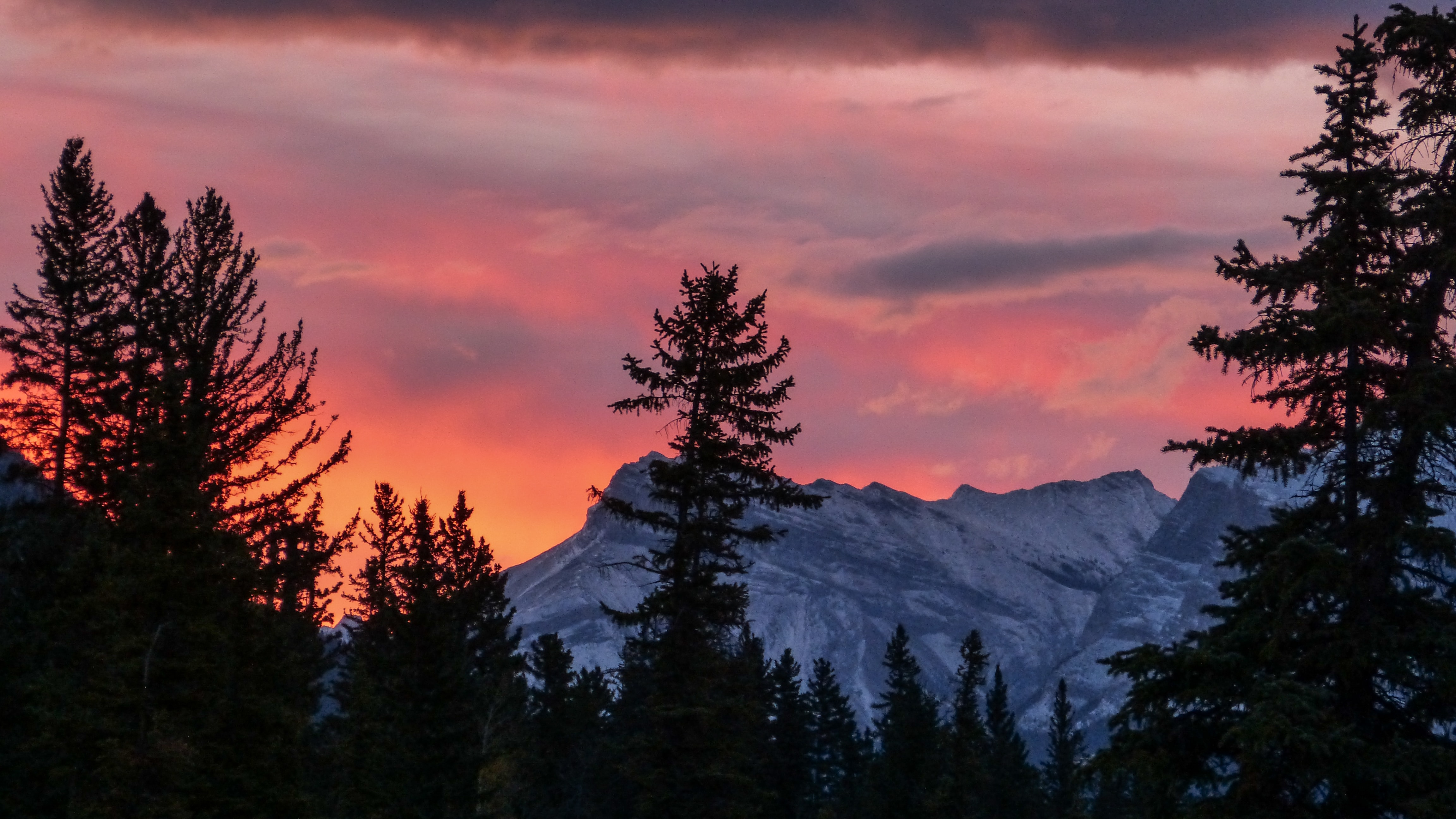 silhouette of trees during golden hour with view of snow-capped mountains