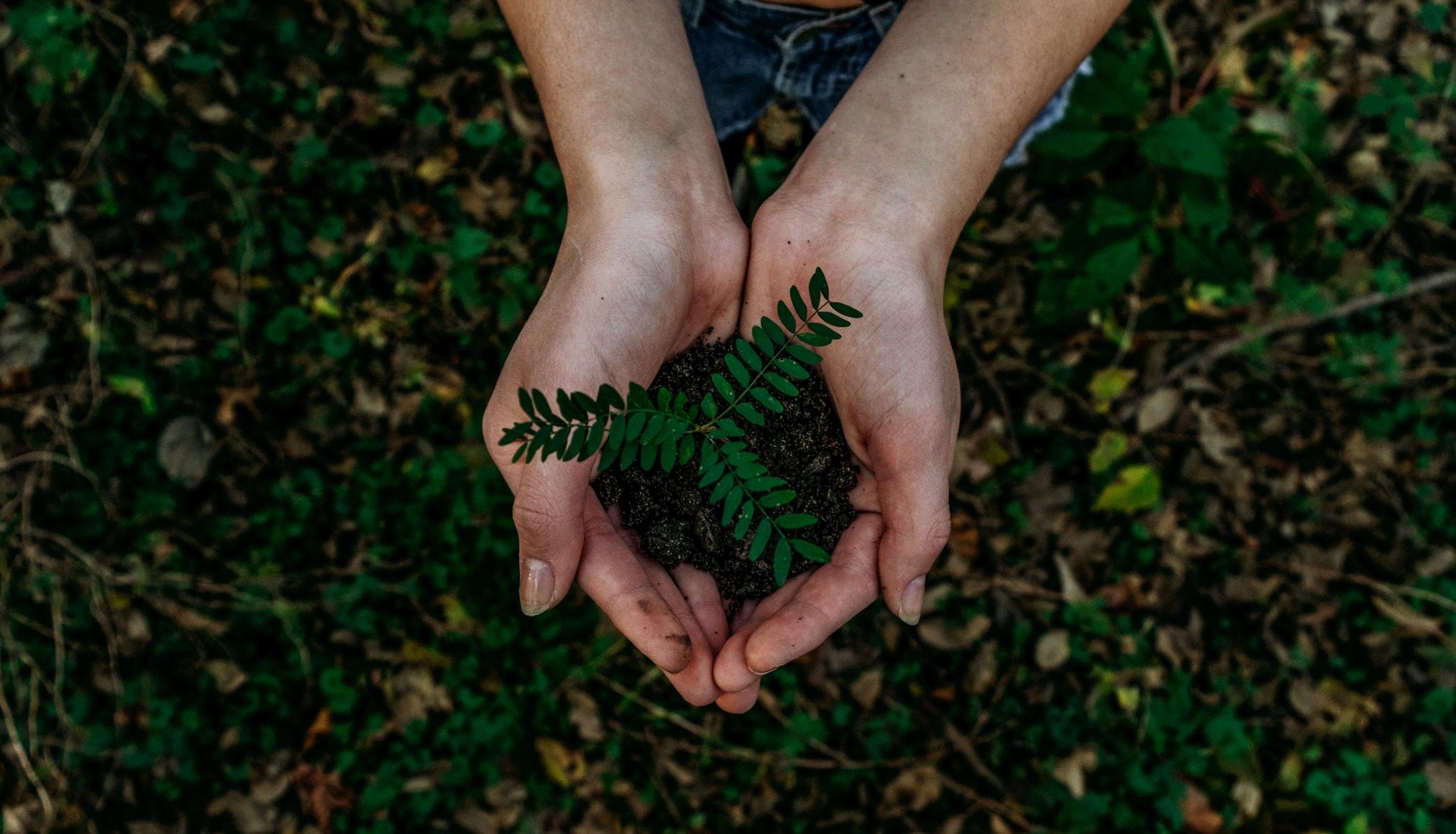Kleine Pflanze in einer Hand als Symbol für Nachhaltigkeit