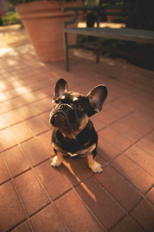 short-coat black puppy on brick ground