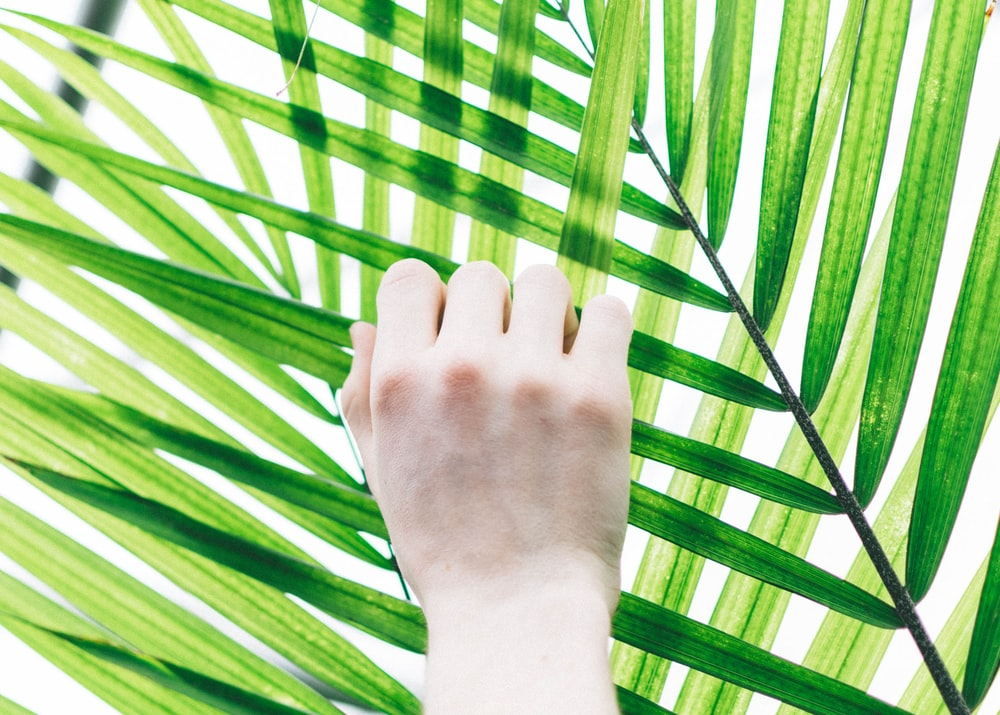person holding palm leaf