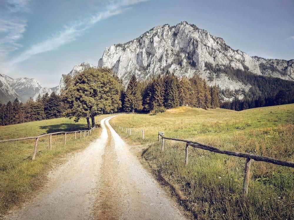 pathway in between grass fields