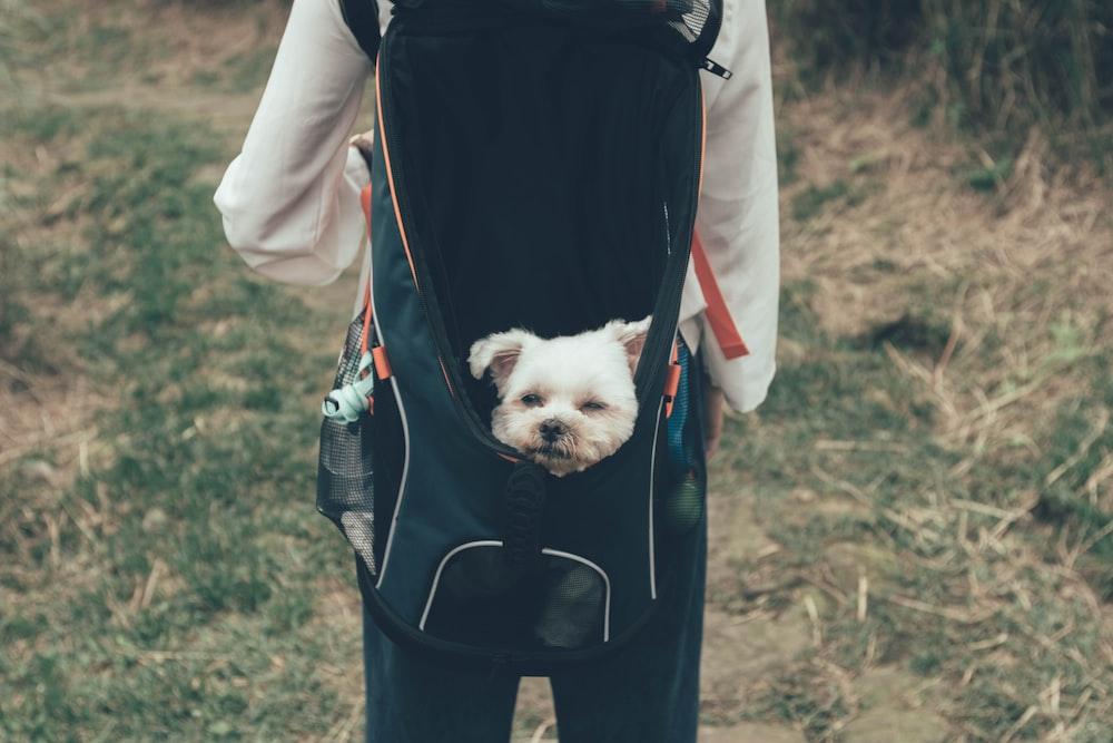 white dog in black pet carrier bag