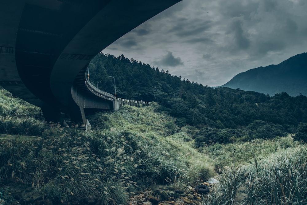 gray concrete bridge beside trees