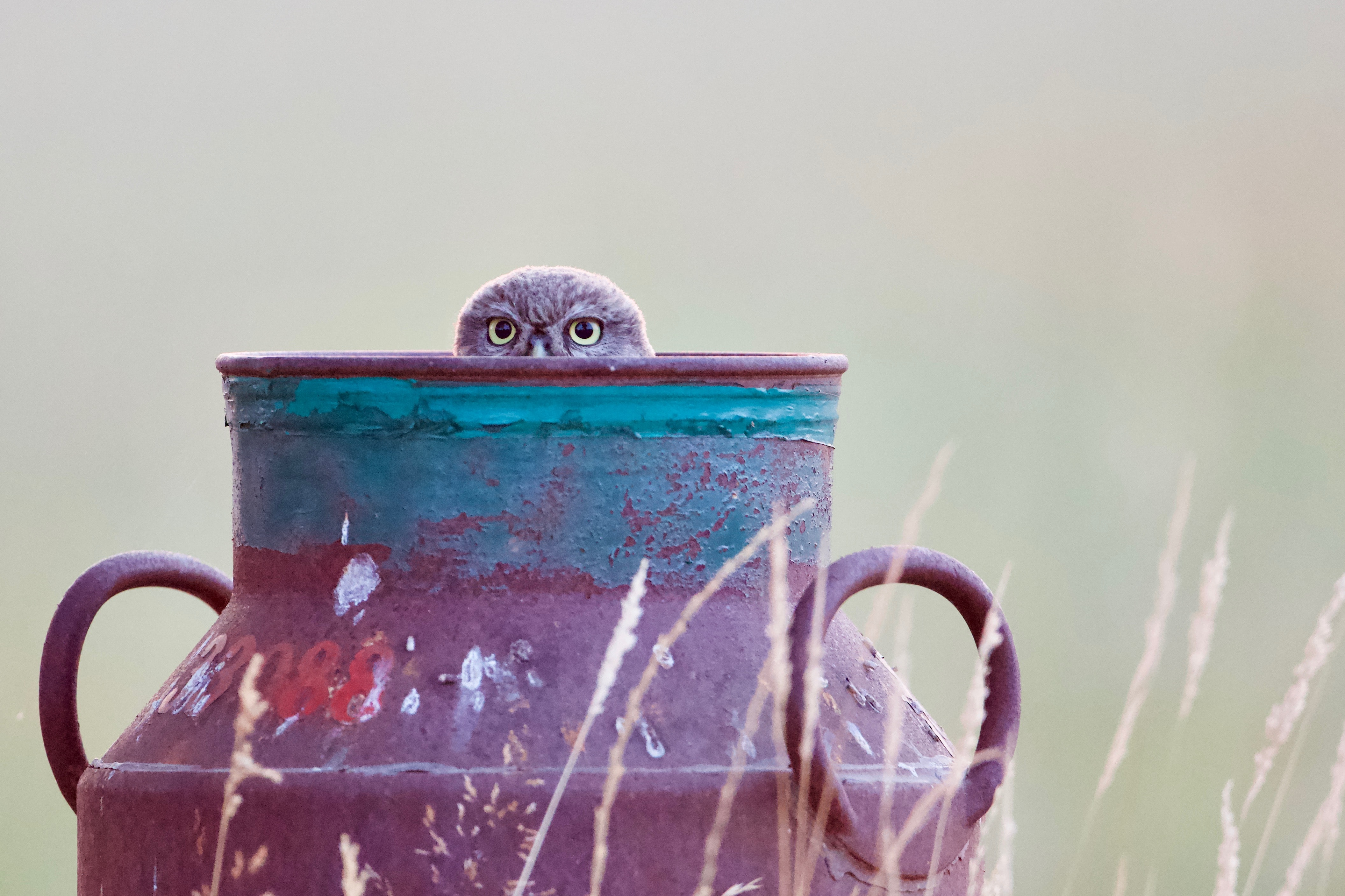 shallow focus photo of black milk tank
