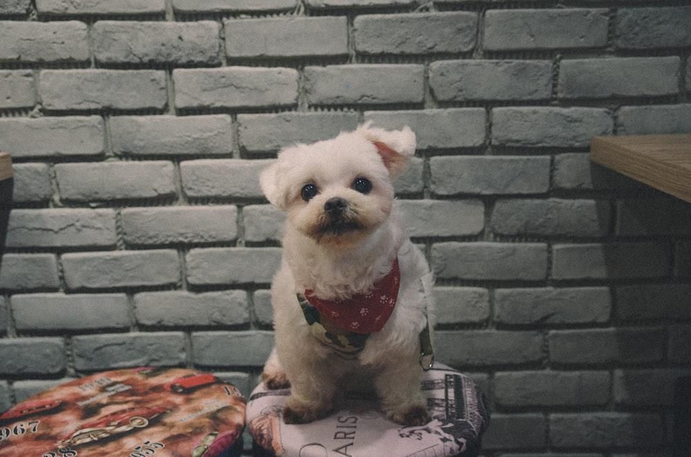 short-coat beige dog beside grey wall