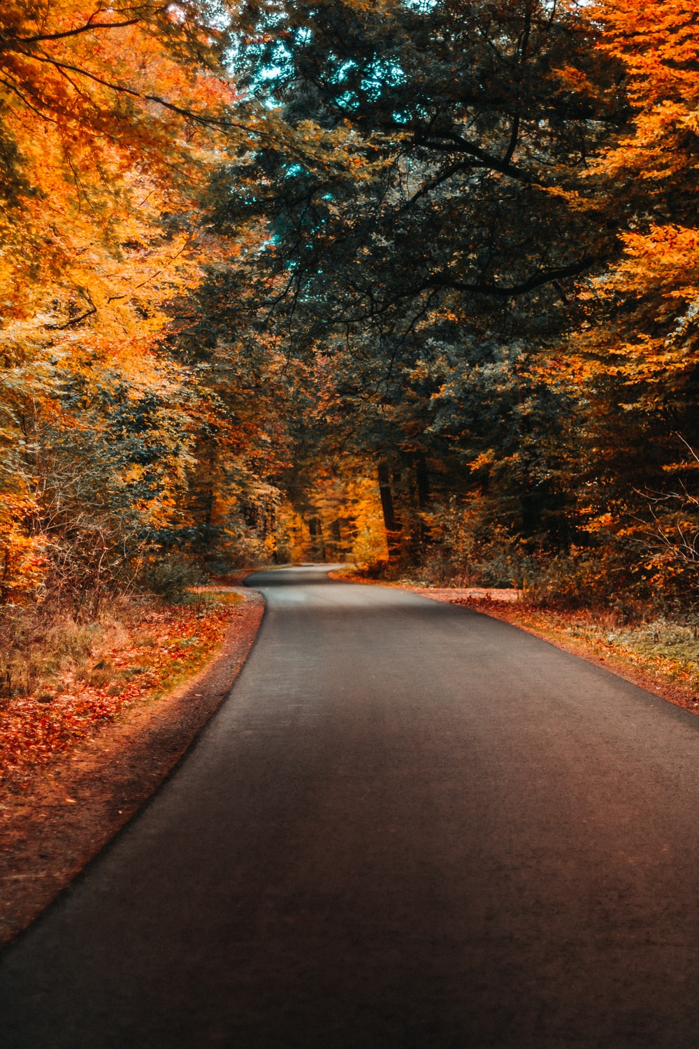 concrete road and autumn trees