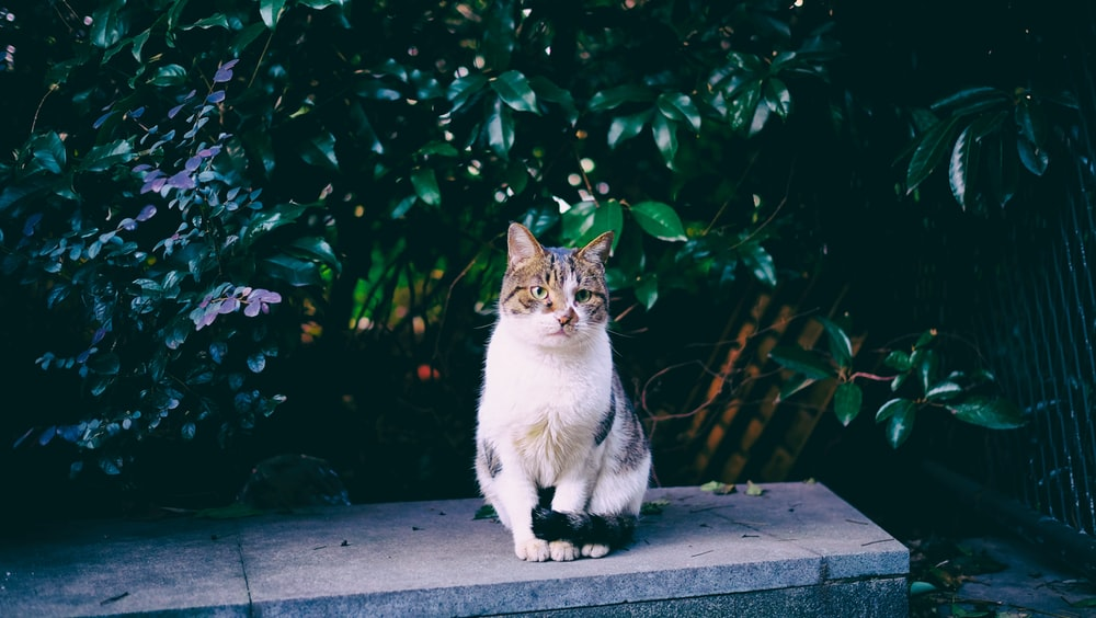 white and brown cat sitting beside plants