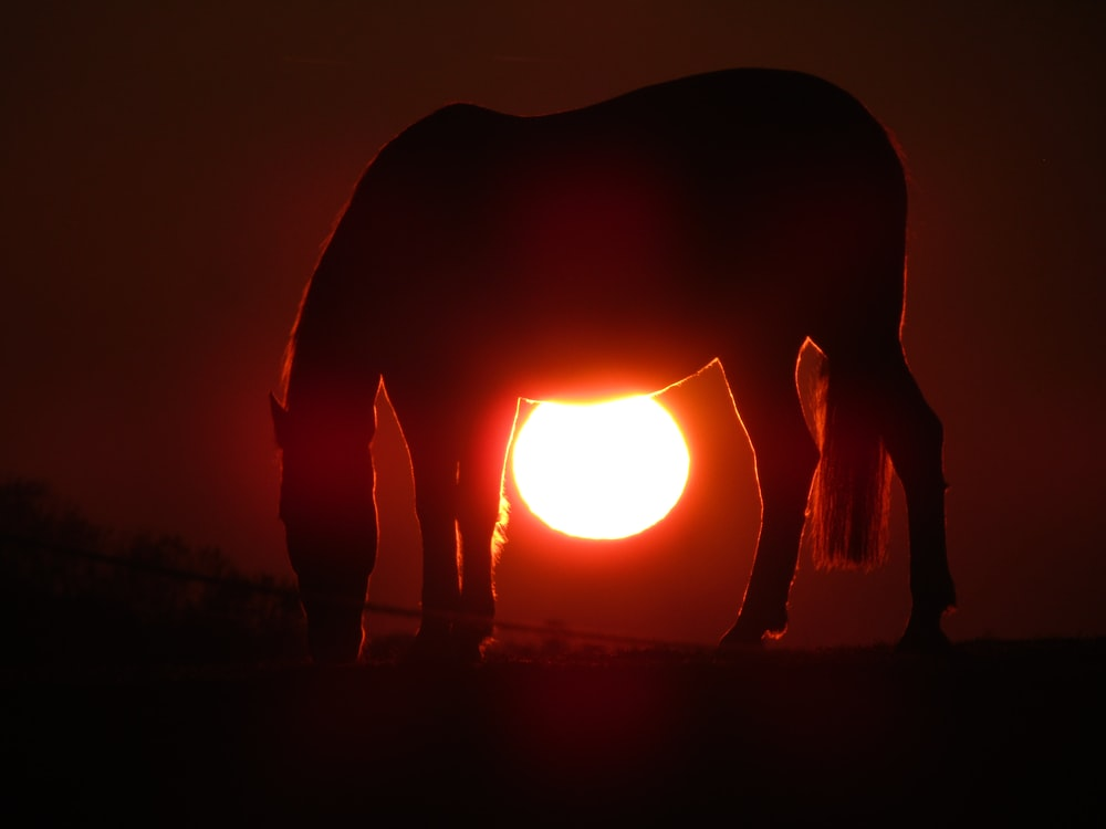 horse during sunset
